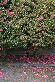 Beau jardin de ressort photographie stock libre de droits