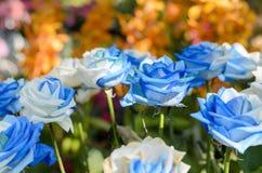 Beau jardin de roses bleues et blanches Photographie stock libre de droits