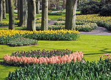 Beau jardin de source Image libre de droits