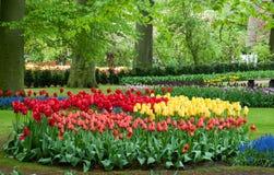Beau jardin de tulipe au printemps Photographie stock libre de droits
