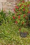 Beau jardin de ville avec les fleurs blanches et roses Image libre de droits