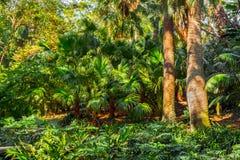Beau jardin luxuriant photographie stock libre de droits