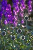 Beau jardin par matin d'été Photo stock
