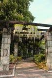 Beau jardin que les treillis pour s'élever plante avec les fleurs blanches accrochantes de la glycine photo libre de droits