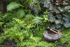 Beau jardin tropical/aménagement avec des plantes tropicales Photo libre de droits