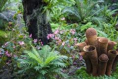 Beau jardin tropical/aménagement avec des plantes tropicales Images stock