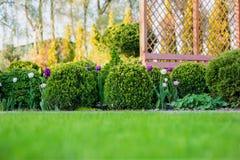 Beau jardin vert avec le pavillon discordant de buissons, de fleur et en bois de buis de frsesh Fond de jardinage d'été scénique images stock