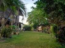 Beau jardin vert près de ma maison photo libre de droits
