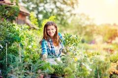 Beau jardinage de jeune femme Photo stock