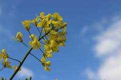 Beau jaune Photographie stock libre de droits