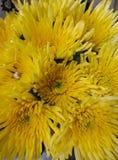 Beau jaune, chrysanthèmes d'aiguille dans un vase, comme fond d'image photo libre de droits