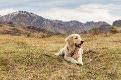 Beau jeune chien se trouvant à l'herbe au fond de montagnes Photo stock