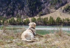 Beau jeune chien se trouvant à l'herbe aux montagnes et au backgr de rivière Photographie stock