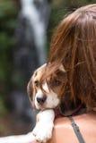 Beau jeune heureux de jolie femme avec le petit briquet de chiot de chien Île tropicale Bali, Indonésie Madame avec le briquet Images libres de droits