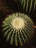 Beau jour avec le cactus photos libres de droits