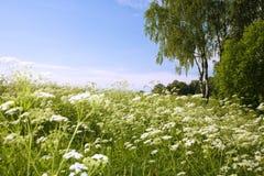 Beau jour d'été. La nature intérieure. Images libres de droits