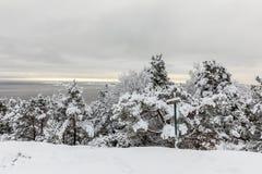 Beau jour d'hiver chez Odderoya dans Kristiansand, la Norvège Pins couverts dans la neige, un signe indiquant le café Photo libre de droits