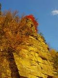 Beau jour ensoleillé dans la forêt d'or d'automne photos stock