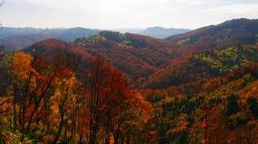 Beau jour ensoleillé dans la forêt d'or d'automne image stock