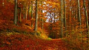 Beau jour ensoleillé dans la forêt d'or d'automne photo libre de droits