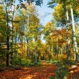 Beau journal de forêt Photographie stock