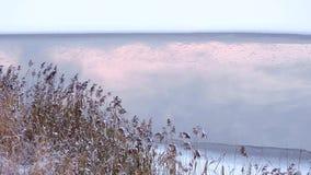 Beau la glace de lac congelée d'hiver par paysage et neigent la réflexion sur l'eau banque de vidéos