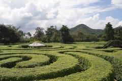 Beau labyrinthe, conception de labyrinthe dans le jardin du parc Photographie stock libre de droits