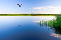 beau lac Photos libres de droits