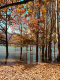 Beau lac avec des arbres Photographie stock libre de droits
