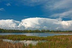 Beau lac avec le ressort de roseaux Photo stock