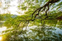 Beau lac avec les arbres verts Hanoï, Vietnam images libres de droits