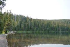 Beau lac dans les bois Photographie stock libre de droits