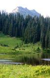 Beau lac de montagne avec les fleurs de floraison Images stock