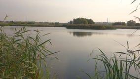 Beau lac en parc naturel de Vacaresti, ville de Bucarest, Roumanie banque de vidéos