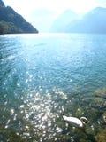 Beau lac ensoleillé de turquoise avec des montagnes et un cygne image libre de droits
