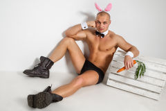 Beau lapin Photo stock