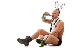 Beau lapin Image stock