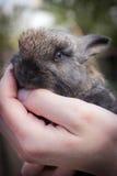 Beau lapin de lapin de bébé dans des mains Amitié et soin de concept d'animaux sauvages Photo stock