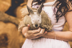 Beau lapin de lapin de bébé dans des mains de jeunes mariées Photo libre de droits