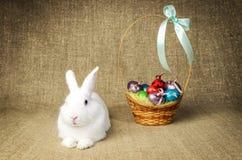 Beau lapin de Pâques propre blanc à côté d'un panier en osier avec des oeufs dans le tissu naturel de toile de jute de krashenyym Photos libres de droits