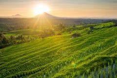 Beau lever de soleil au-dessus des terrasses de riz de Jatiluwih Image libre de droits