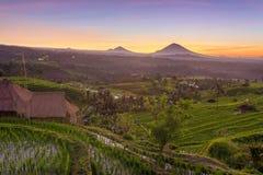 Beau lever de soleil au-dessus des terrasses de riz de Jatiluwih Photo libre de droits