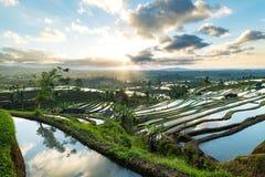 Beau lever de soleil au-dessus des terrasses de riz de Jatiluwih Images stock