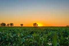 Beau lever de soleil au-dessus de la campagne serbe images stock
