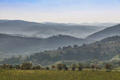 Beau lever de soleil avec du brouillard entre les collines avec des vignobles Photographie stock