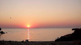 Beau lever de soleil d'or de coucher du soleil sur la mer, calme complet, mouettes de vol banque de vidéos