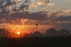 Beau lever de soleil dans le sauvage Images stock