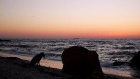 Beau lever de soleil rose de coucher du soleil sur la mer, calme complet, mouettes de vol clips vidéos