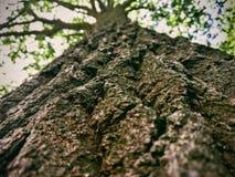 Beau liège du ` s d'arbre Image stock
