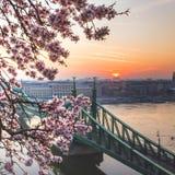 Beau Liberty Bridge au lever de soleil avec des fleurs de cerisier à Budapest, Hongrie Le ressort est arrivé à Budapest photos libres de droits